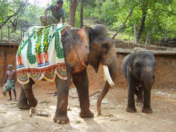 elephants-in-ponda