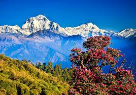 Nepali mägi